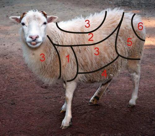 _Wollqualitäten Schaf